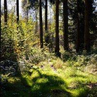 А в лесу хорошо ... спокойно. :: Владимир Икомацких