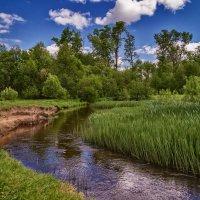 Дре́зна — река 3 :: Андрей Дворников