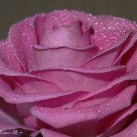 Королева цветов :: ~ Елена М ~