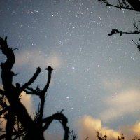 ночной лес :: Юлия
