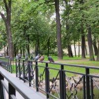 Голуби на мосту :: Вера Щукина