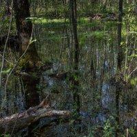 После дождей в лесу. :: Владимир Безбородов