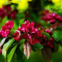 Цветущий сад :: Oksanka Kraft