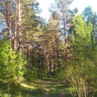 Вечерний лес :: Валентина Ломакина