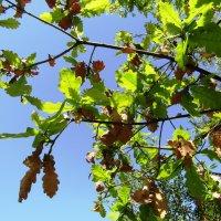 А вот не опадают старые листья... :: Galaelina