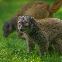 Любопытный зверь :: Анна Удалова