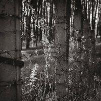 Узоры на колючей проволоке. :: Андрий Майковский