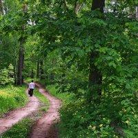 Многих людей помнит эта дорога... :: Лесо-Вед (Баранов)