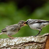 дозаправка :: linnud