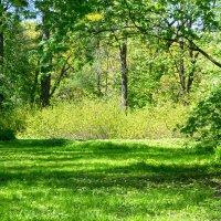 Июньская зелень :: Aнна Зарубина