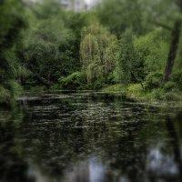 Есть в графском парке черный пруд... :: Сергей Козырев