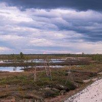 Сибирское болото. :: Анатолий Бахтин