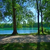Июнь...У озера... :: Galina Dzubina