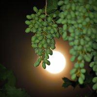 в лунную ночь.... :: Юрий Владимирович