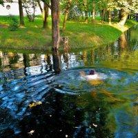 Поплыть к другу... :: Sergey Gordoff