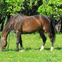 Городская лошадь :: Вера Щукина