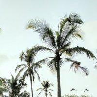 Здесь растет кокос :: Tanja Gerster