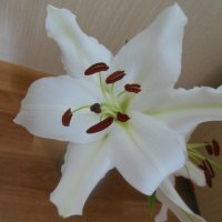 Белая лилия. :: Татьяна