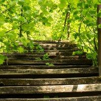 лесенка в Саввино Сторожевском монастыре в Звенигороде :: jenia77 Миронюк Женя