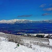 vit5 виноградники :: Vitaly Faiv