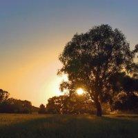 Светится закат вечернею росою... :: Лесо-Вед (Баранов)
