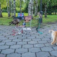 Орел и кот :: Игорь Юрченко