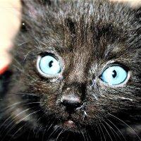 эти глаза....) :: татьяна якухина