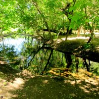 В Кумженской роще :: Нина Бутко