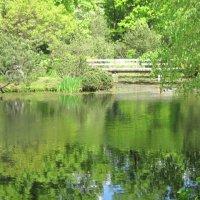 Пруд в Японском саду :: Маера Урусова