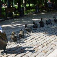 Памятник уточкам. :: Татьяна Помогалова