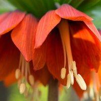 Цветы :: Дина Мазаник