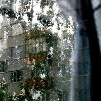 """""""Сюр"""" за  моим  окном.... 1 :: Валерия  Полещикова"""