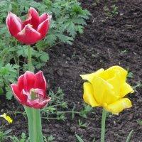 Два цвета :: Дмитрий Никитин