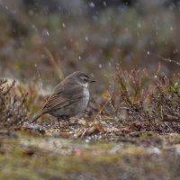 12 июня .  даже птицы в шоке от такого лета!!! :: Олег Кулябин
