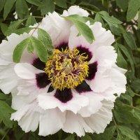 Июньские цветы :: Aнна Зарубина