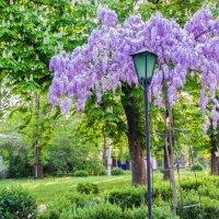 Недавно Весна была! :: Варвара