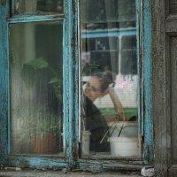 Молодая жизнь старого окна. :: Валентина Налетова