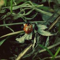 Маленькая жизнь :: Алёна Епичурина