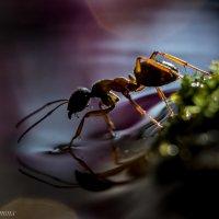 Путешествие муравьишки... :: Алёна