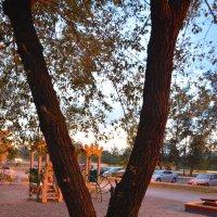 Клён на детской площадке. :: юрий Амосов