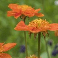 весенние цветочки :: Лариса Батурова