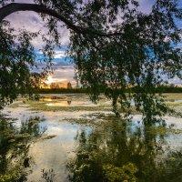 Старый пруд... :: Влад Никишин