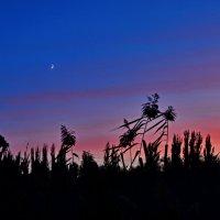 Вечернее небо из зарослей рагозы... :: Aлександр **