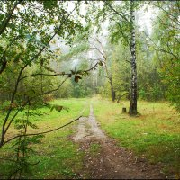 Осень в Ромашковском лесу :: Юрий Яньков