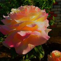 платье из розы :: Роза Бара