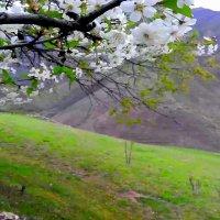 Природа гор :: Сакира Шундалов