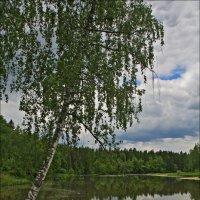 Воря, речка где и летом вода ледяная :: Дмитрий Анцыферов