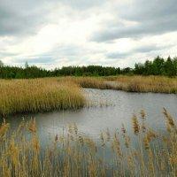Природа в мае (пасмурно и ветренно) :: Милешкин Владимир Алексеевич