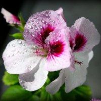 Куда же летом без цветов! :: Андрей Заломленков
