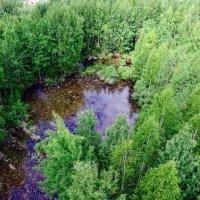 Озеро в лесу :: AristovArt